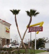 In-n-Out-Palm-Trees
